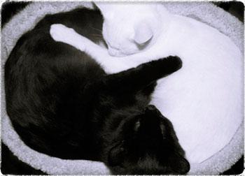 Почему противоположности притягиваются, объясняем на котиках